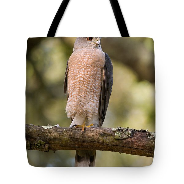 Cooper's Hawk Tote Bag by Doug Herr