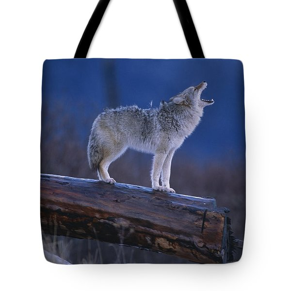 Coyote Standing On Log Alaska Wildlife Tote Bag
