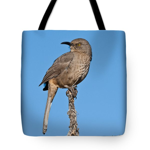 Curve-billed Thrasher Tote Bag