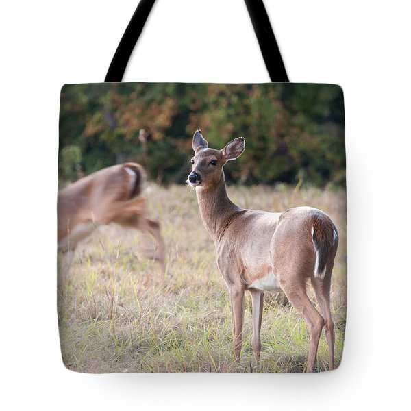 Deer At Paynes Prairie Tote Bag