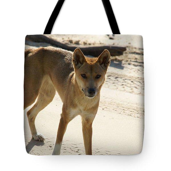 Dingo Tote Bag