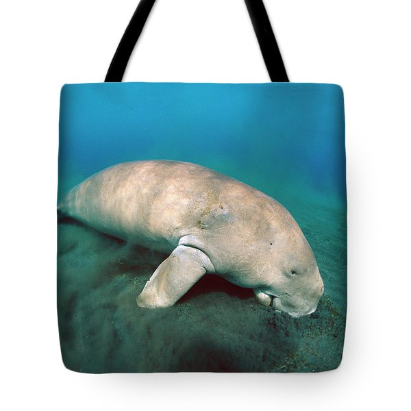 Dugong  Feeding On Sea Grass Tote Bag by Mike Parry