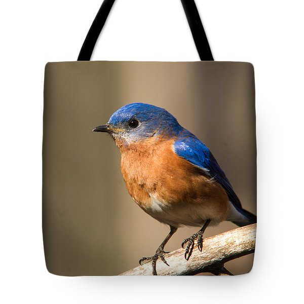 Eastern Bluebird Male 7 Tote Bag by Douglas Barnett