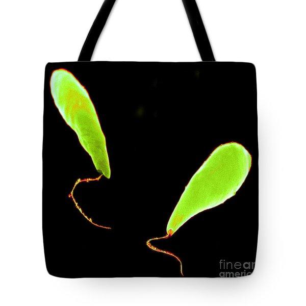 Euglena Sem Tote Bag by David M. Phillips