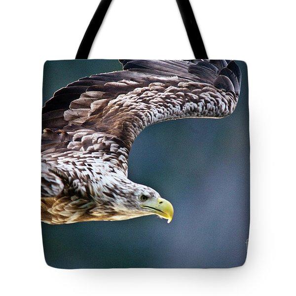 European Sea Eagle Tote Bag by Heiko Koehrer-Wagner