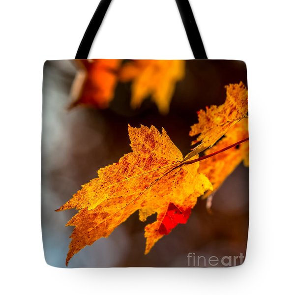 Tote Bag featuring the photograph Fall Colors by Bernd Laeschke