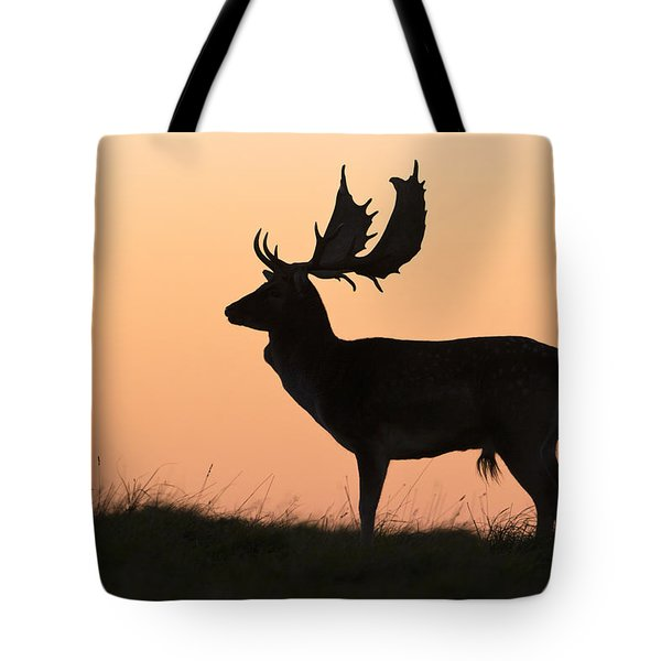 Fallow Deer Buck At Sunset Denmark Tote Bag