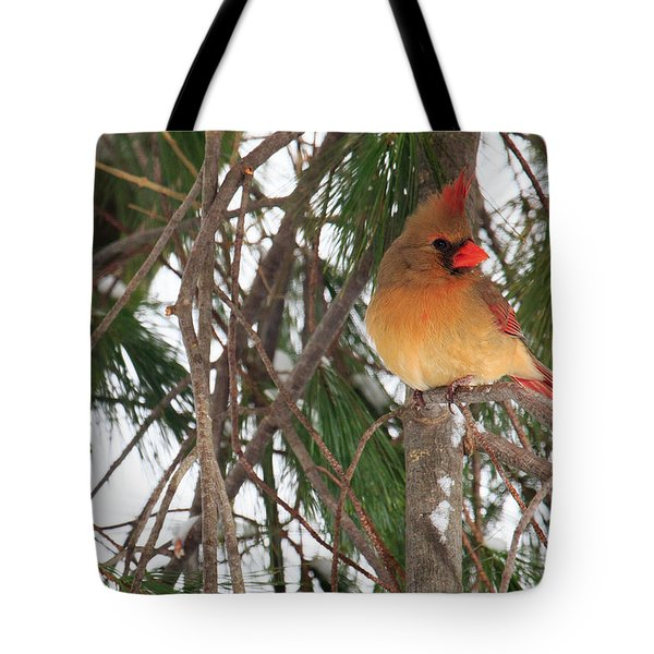 Female Cardinal Tote Bag by Everet Regal