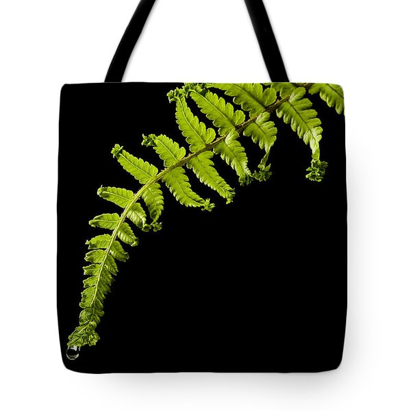 Fern With Raindrop Tote Bag by Trevor Chriss