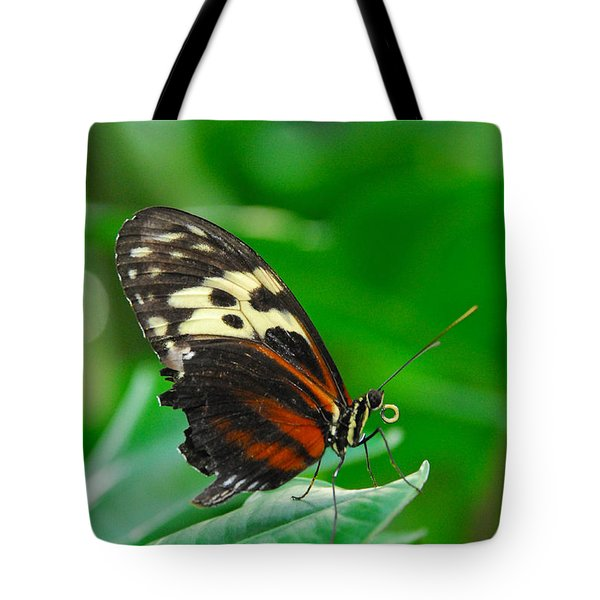 D5l15 Butterfly At Franklin Park Conservatory Tote Bag