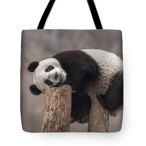 Giant Panda Cub Wolong National Nature Tote Bag by Katherine Feng