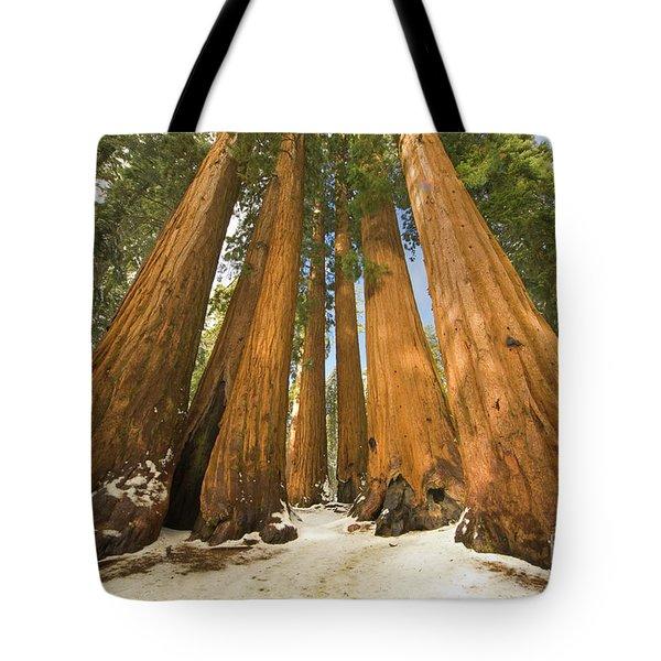 Giant Sequoias Sequoia N P Tote Bag