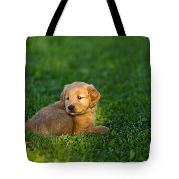 Golden Retriever Puppy Tote Bag by Linda Freshwaters Arndt