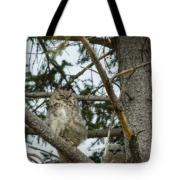 Great Horned Owls Tote Bag