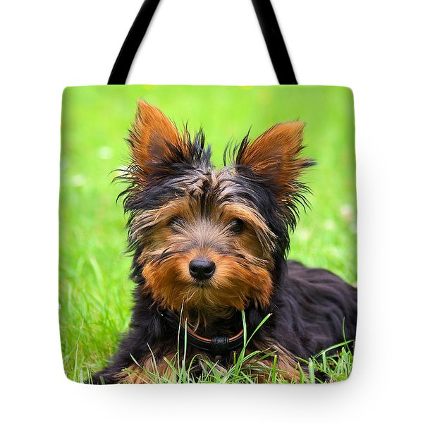 Hello Toby Tote Bag by Angela Doelling AD DESIGN Photo and PhotoArt