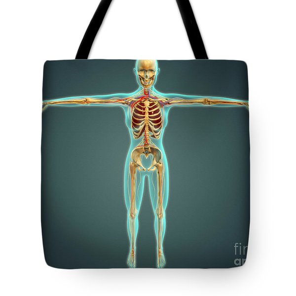 Human Body Showing Skeletal System Tote Bag by Stocktrek Images
