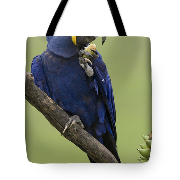 Hyacinth Macaw Eating Palm Nut Tote Bag