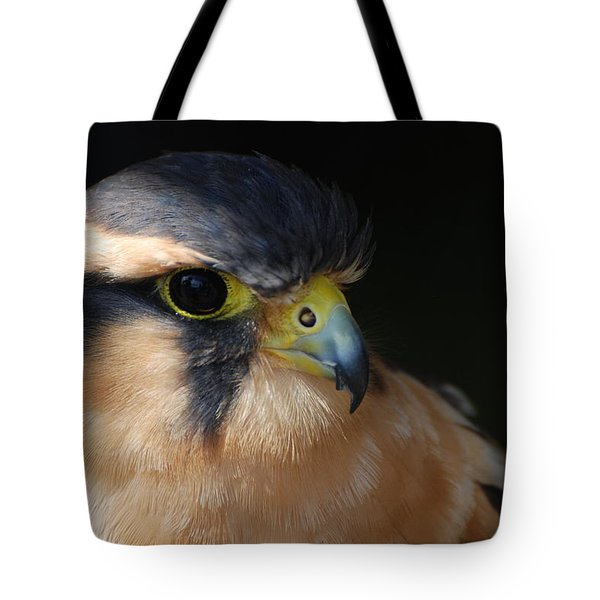 Kestrel Falcon Tote Bag by Amy Porter