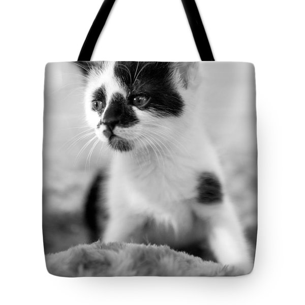 Kitten Dreaming Tote Bag
