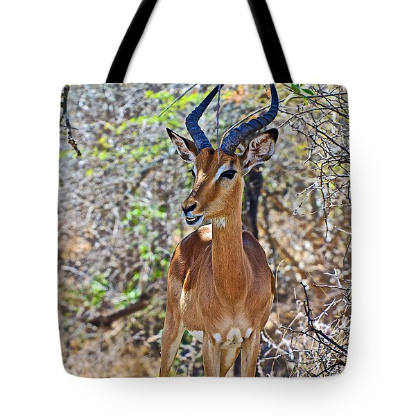 Male Impala In Kruger National Park-south Africa   Tote Bag