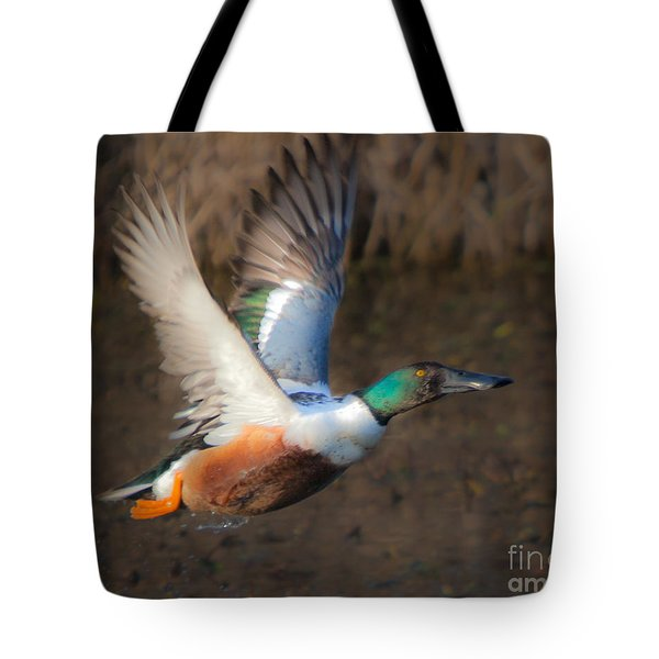 Male Northern Shoveler Tote Bag