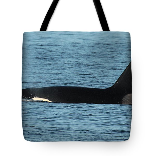 Tote Bag featuring the photograph Male Orca Killer Whale In Monterey Bay California 2013 by California Views Mr Pat Hathaway Archives