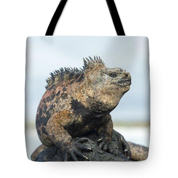 Marine Iguana Male Turtle Bay Santa Tote Bag