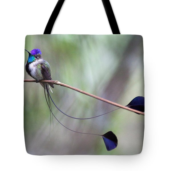 Marvelous Spatuletail Tote Bag by Max Waugh