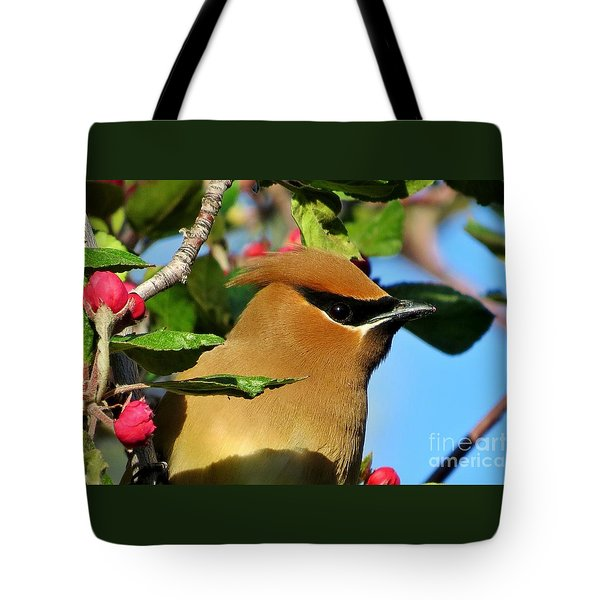 Masked Bandit Tote Bag by Michele Penner