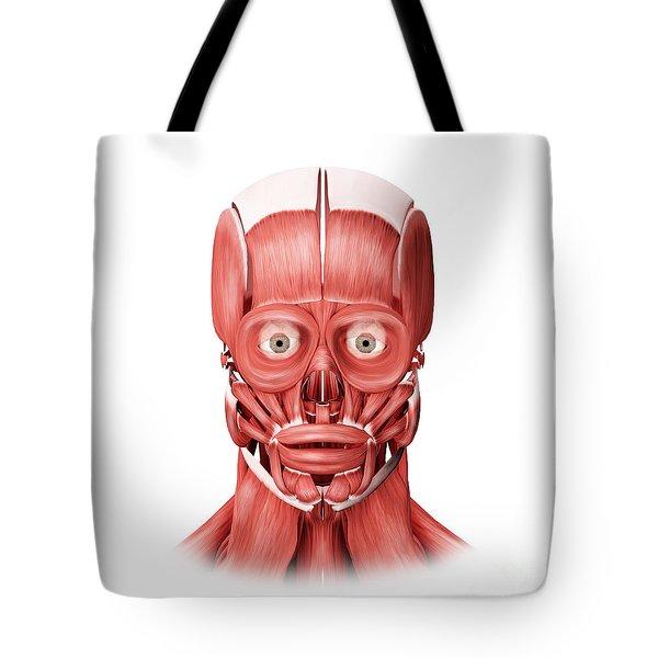 Medical Illustration Of Male Facial Tote Bag by Stocktrek Images