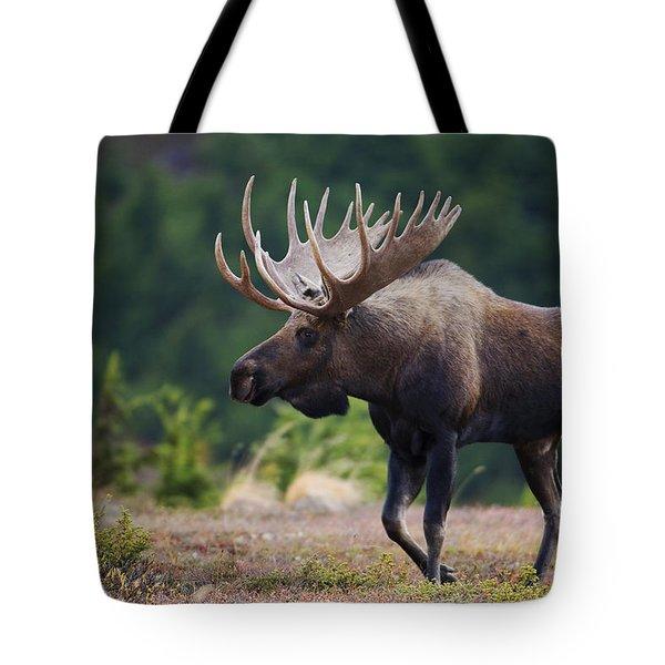 Moose Bull Walking On Autumn Tundra Tote Bag