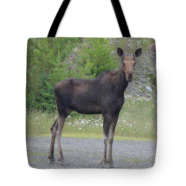 Moose Tote Bag by James Petersen