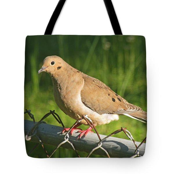 Morning Dove I Tote Bag