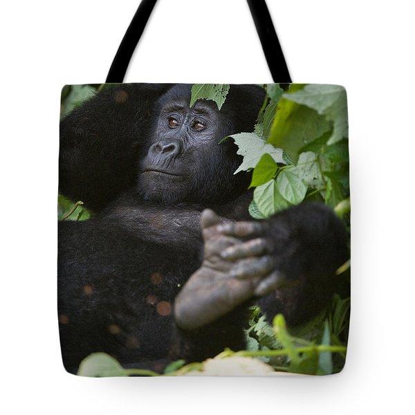 Mountain Gorilla Gorilla Beringei Tote Bag