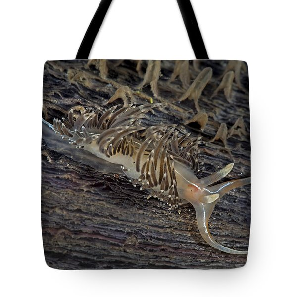 Nudibranch Sitting On A Pen Shell Tote Bag