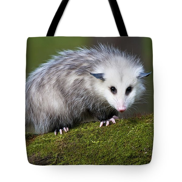 Opossum  Tote Bag by Paul Cannon