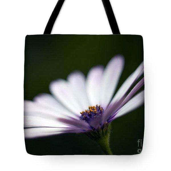 Osteospermum Daisy Tote Bag by Tony Cordoza