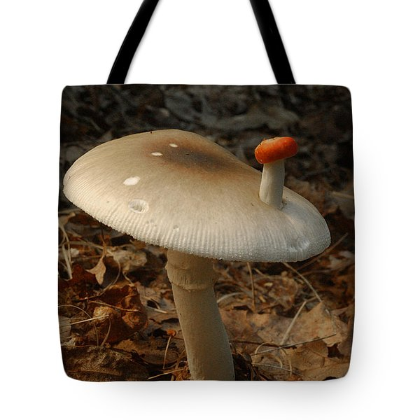 Parasol Mushroom Macrolepiota Sp Tote Bag by Susan Leavines