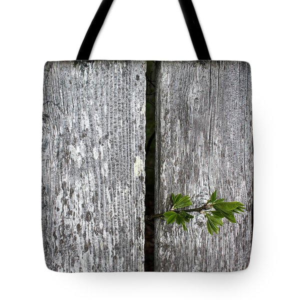 Peek-a-boo Tote Bag by Mary Bedy