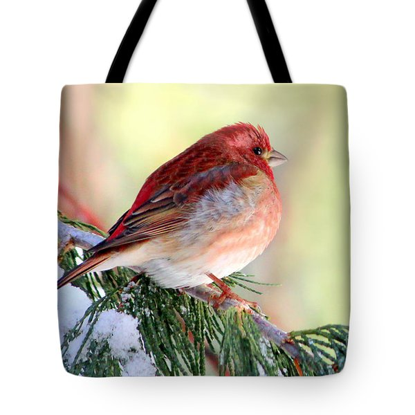 Tote Bag featuring the photograph Purple Flinch  by Irina Hays