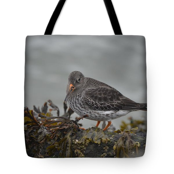 Purple Sandpiper Tote Bag