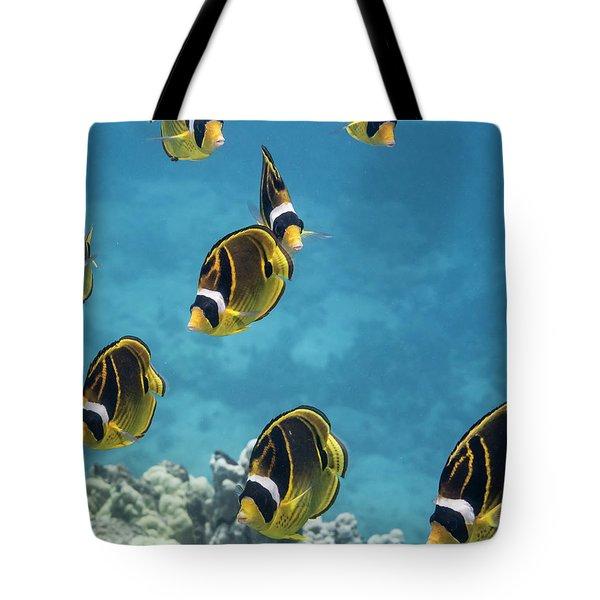 Racoon Butterflyfish  Chaetodon Lunula Tote Bag