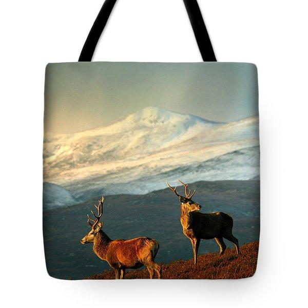 Red Deer Stags Tote Bag