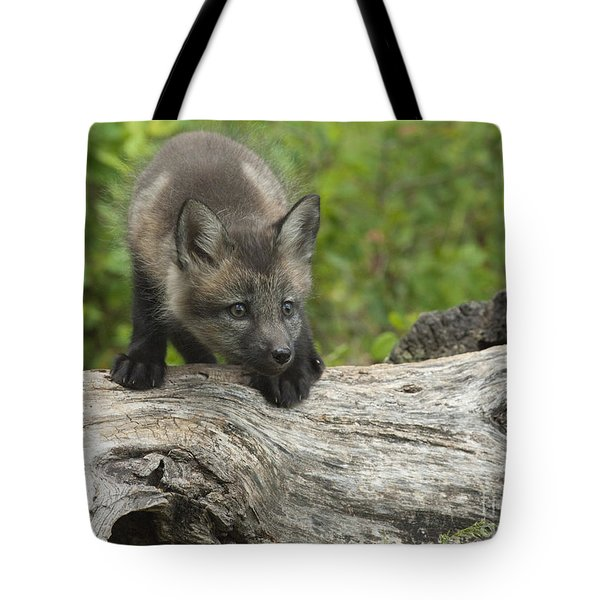 Red Fox Kit Tote Bag by Sandra Bronstein
