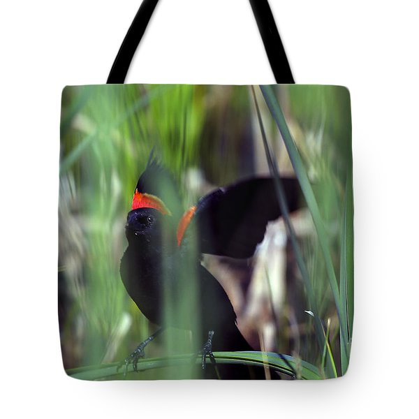 Red-winged Blackbird Tote Bag by Steven Ralser