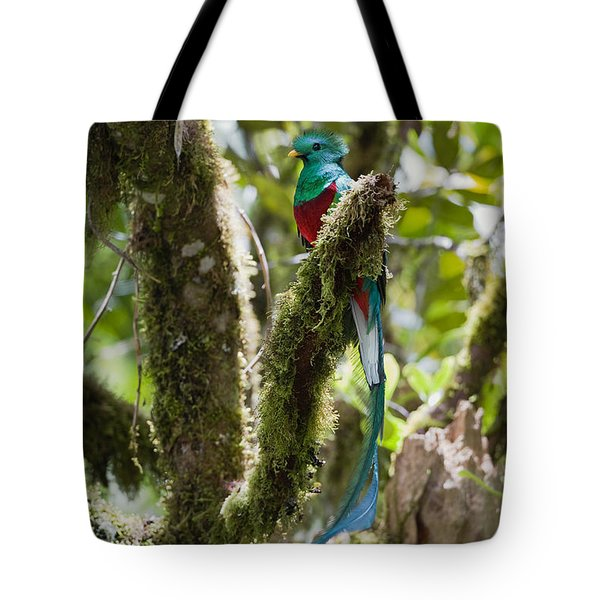 Tote Bag featuring the photograph Resplendent Quetzal Male Costa Rica by Konrad Wothe