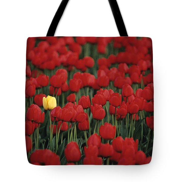Rows Of Red Tulips With One Yellow Tulip Tote Bag by Jim Corwin
