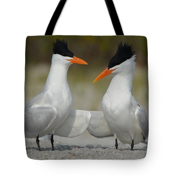 Royal Terns Tote Bag by James Petersen