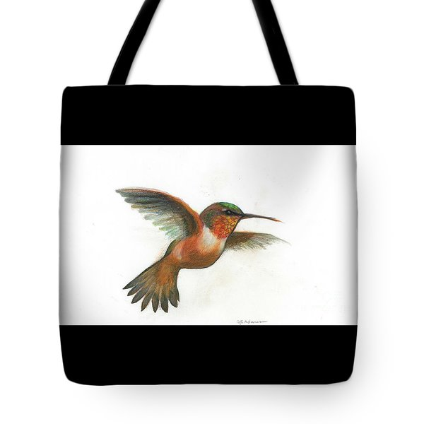 Rufous hummingbird drawing - photo#13