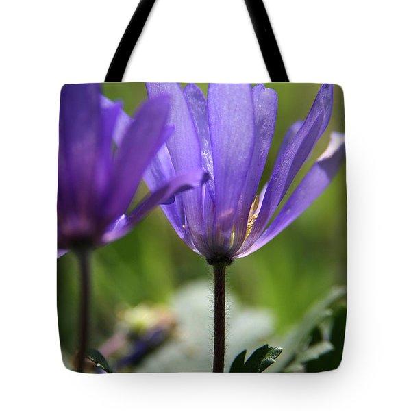 Soft Light  Tote Bag by Neal Eslinger
